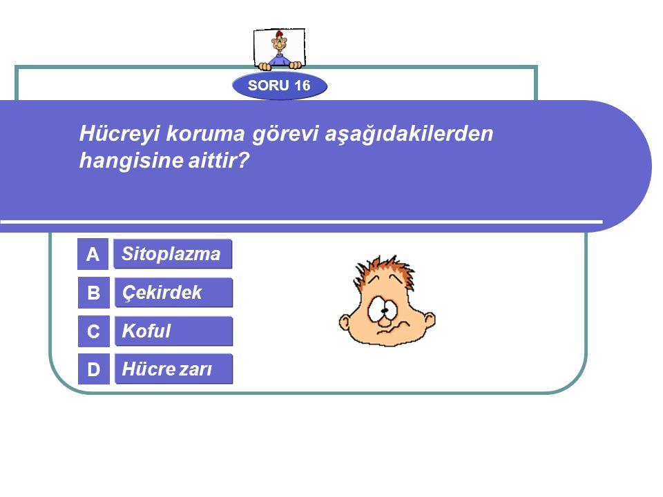 SORU 16 Sitoplazma Çekirdek Koful Hücre zarı A B C D Hücreyi koruma görevi aşağıdakilerden hangisine aittir?