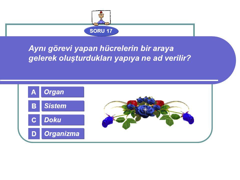 SORU 17 Organ Sistem Doku Organizma A B C D Aynı görevi yapan hücrelerin bir araya gelerek oluşturdukları yapıya ne ad verilir?