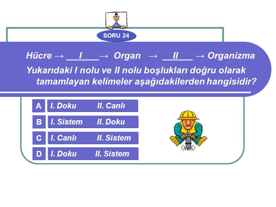 SORU 24 I. Doku II. Canlı I. Sistem II. Doku I. Canlı II. Sistem I. Doku II. Sistem A B C D Hücre → I → Organ → II → Organizma Yukarıdaki I nolu ve II