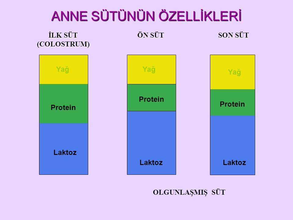 Protein Laktoz Yağ Laktoz ÖN SÜT SON SÜT İLK SÜT (COLOSTRUM) OLGUNLAŞMIŞ SÜT ANNE SÜTÜNÜN ÖZELLİKLERİ