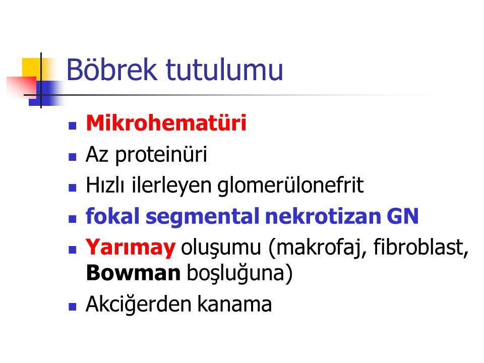 Böbrek tutulumu Mikrohematüri Az proteinüri Hızlı ilerleyen glomerülonefrit fokal segmental nekrotizan GN Yarımay oluşumu (makrofaj, fibroblast, Bowma