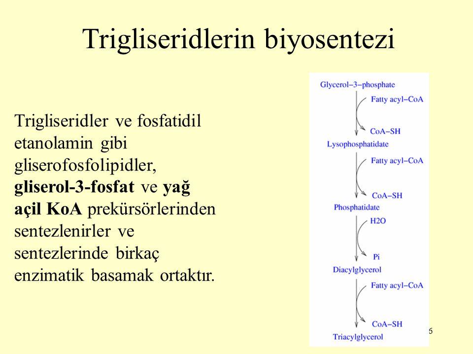 26 Trigliseridlerin biyosentezi Trigliseridler ve fosfatidil etanolamin gibi gliserofosfolipidler, gliserol-3-fosfat ve yağ açil KoA prekürsörlerinden