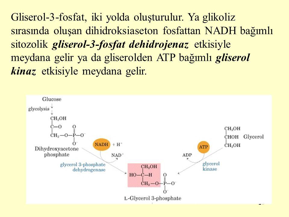 27 Gliserol-3-fosfat, iki yolda oluşturulur. Ya glikoliz sırasında oluşan dihidroksiaseton fosfattan NADH bağımlı sitozolik gliserol-3-fosfat dehidroj