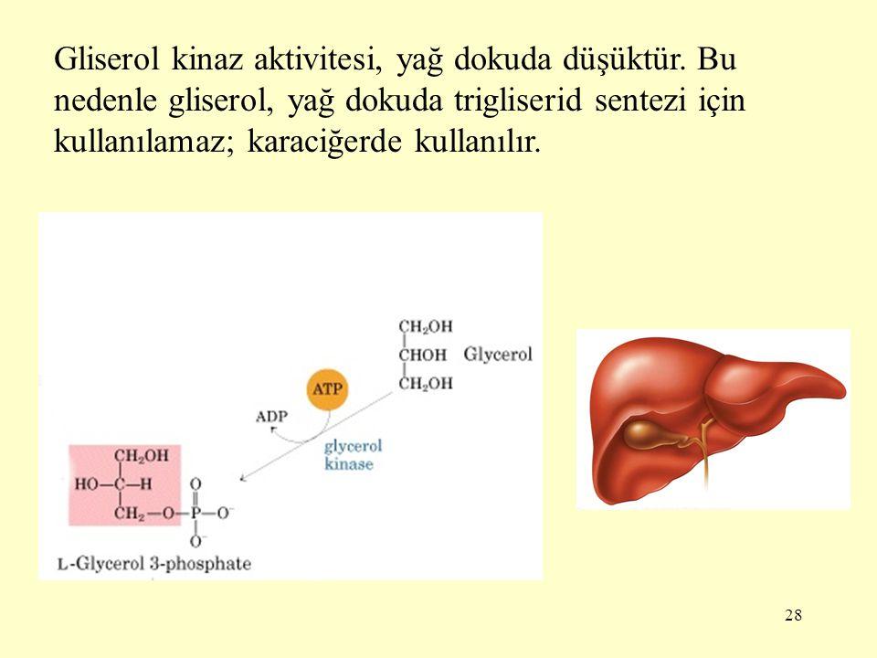 28 Gliserol kinaz aktivitesi, yağ dokuda düşüktür. Bu nedenle gliserol, yağ dokuda trigliserid sentezi için kullanılamaz; karaciğerde kullanılır.