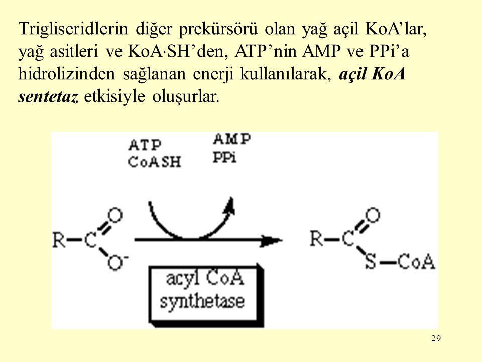 29 Trigliseridlerin diğer prekürsörü olan yağ açil KoA'lar, yağ asitleri ve KoA  SH'den, ATP'nin AMP ve PPi'a hidrolizinden sağlanan enerji kullanıla