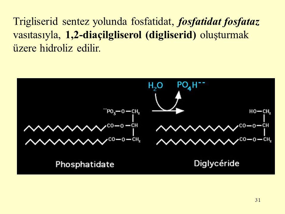 31 Trigliserid sentez yolunda fosfatidat, fosfatidat fosfataz vasıtasıyla, 1,2-diaçilgliserol (digliserid) oluşturmak üzere hidroliz edilir.