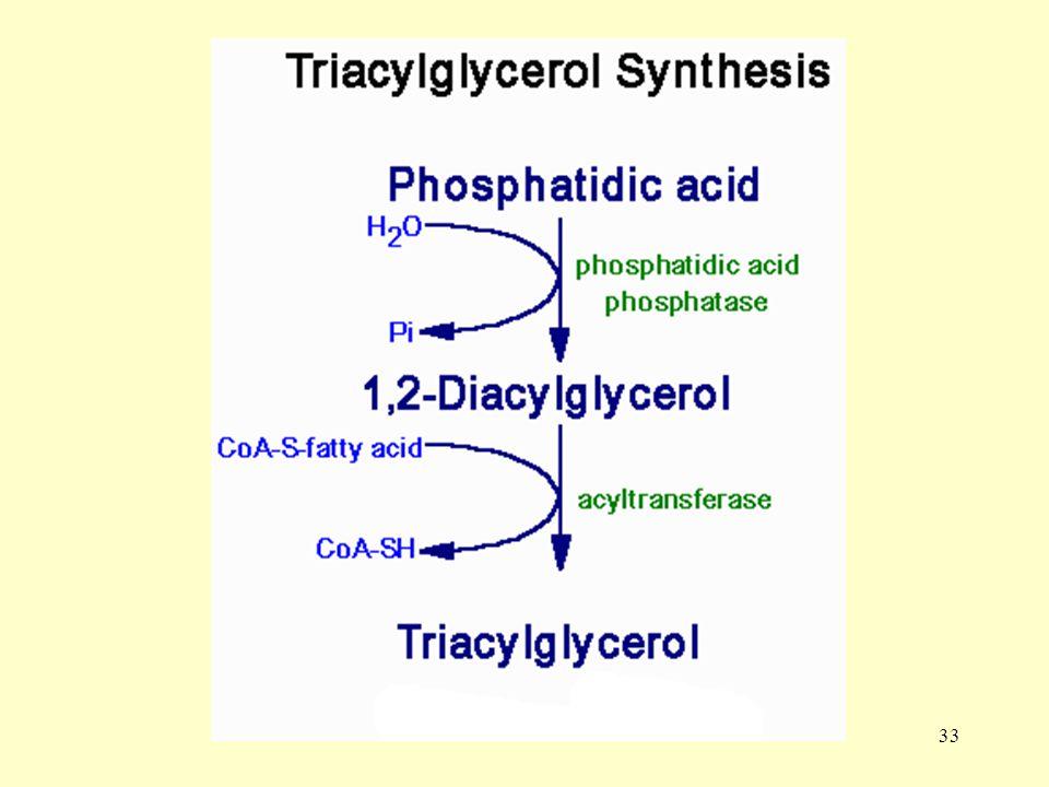 34 Karbohidrat ve proteinlerin fazla miktarda alınması durumunda glukoz ve amino asitlerden trigliserid oluşur ki bu olay liponeojenez olarak tanımlanır.