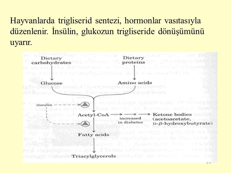 36 Hayvanlarda trigliserid sentezi, hormonlar vasıtasıyla düzenlenir. İnsülin, glukozun trigliseride dönüşümünü uyarır.