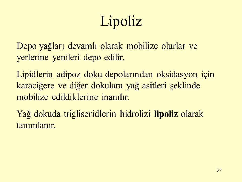 37 Lipoliz Depo yağları devamlı olarak mobilize olurlar ve yerlerine yenileri depo edilir. Lipidlerin adipoz doku depolarından oksidasyon için karaciğ