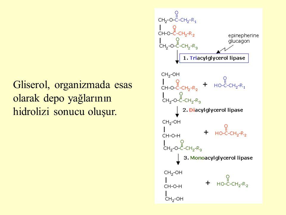 6 Gliserol, organizmada esas olarak depo yağlarının hidrolizi sonucu oluşur.