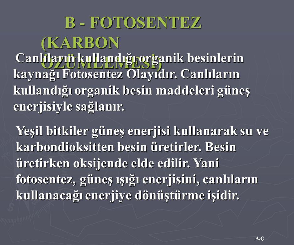 A.Ç B - FOTOSENTEZ (KARBON ÖZÜMLEMESİ) Canlıların kullandığı organik besinlerin kaynağı Fotosentez Olayıdır. Canlıların kullandığı organik besin madde