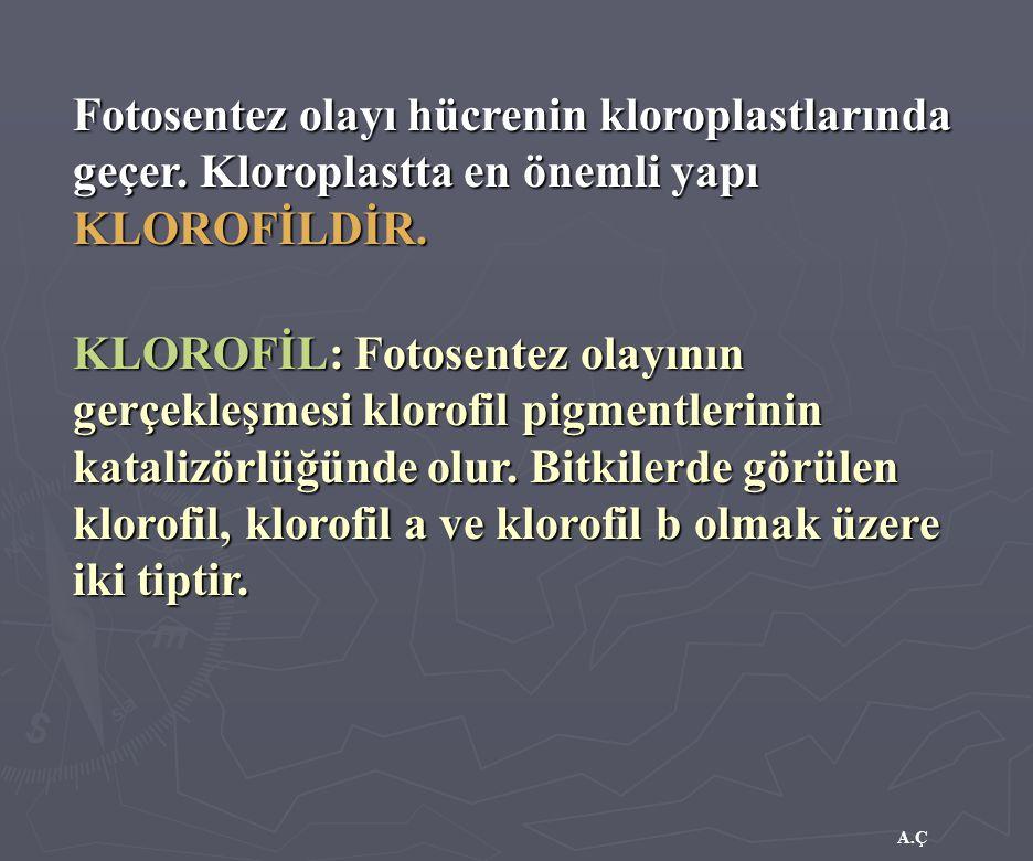 A.Ç Fotosentez olayı hücrenin kloroplastlarında geçer. Kloroplastta en önemli yapı KLOROFİLDİR. KLOROFİL: Fotosentez olayının gerçekleşmesi klorofil p