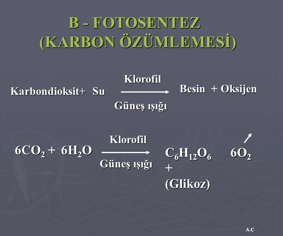 A.Ç B - FOTOSENTEZ (KARBON ÖZÜMLEMESİ) Karbondioksit+ Klorofil Besin Güneş ışığı 6CO 2 6CO 2 + C 6 H 12 O 6 C 6 H 12 O 6 +(Glikoz) Klorofil Güneş ışığ