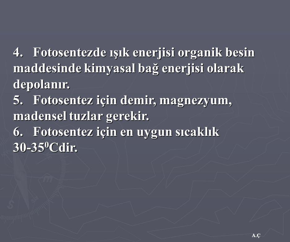 A.Ç 4. Fotosentezde ışık enerjisi organik besin maddesinde kimyasal bağ enerjisi olarak depolanır. 5. Fotosentez için demir, magnezyum, madensel tuzla