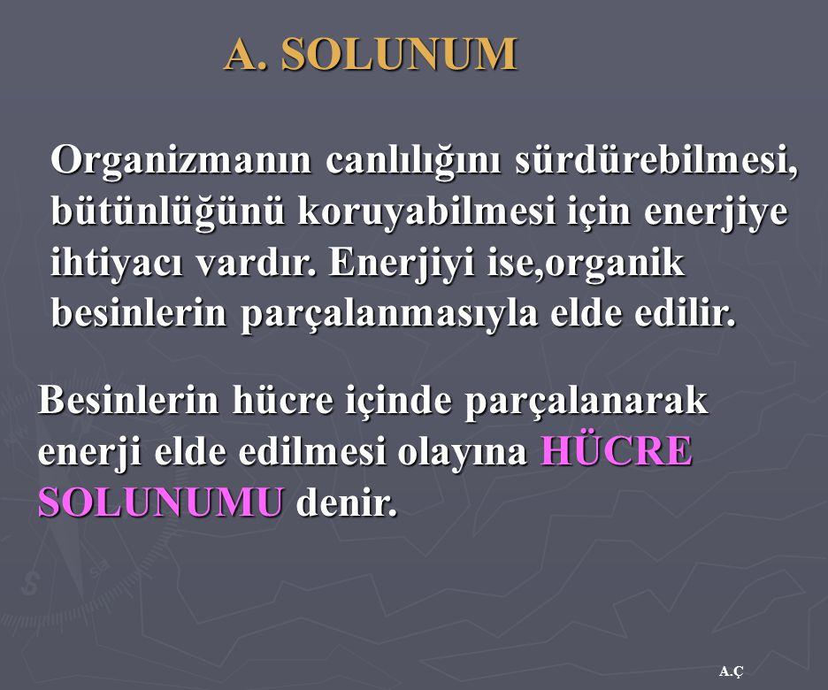 A. SOLUNUM Organizmanın canlılığını sürdürebilmesi, bütünlüğünü koruyabilmesi için enerjiye ihtiyacı vardır. Enerjiyi ise,organik besinlerin parçalanm