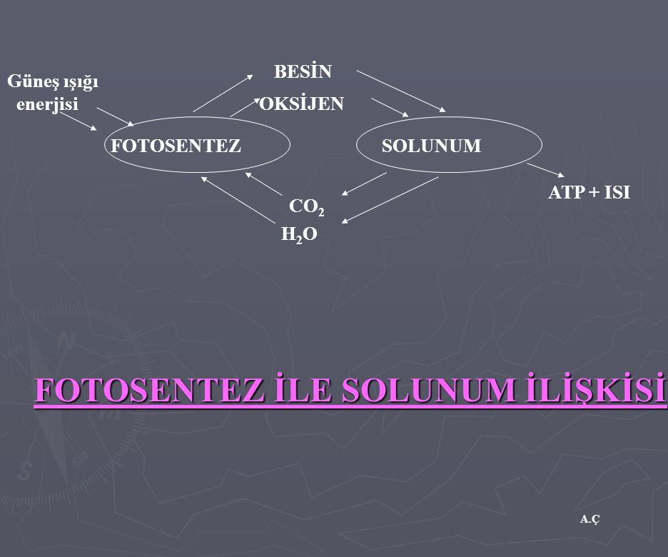 A.Ç FOTOSENTEZ İLE SOLUNUM İLİŞKİSİ Güneş ışığı enerjisi BESİN OKSİJEN FOTOSENTEZSOLUNUM CO 2 H2OH2O ATP + ISI