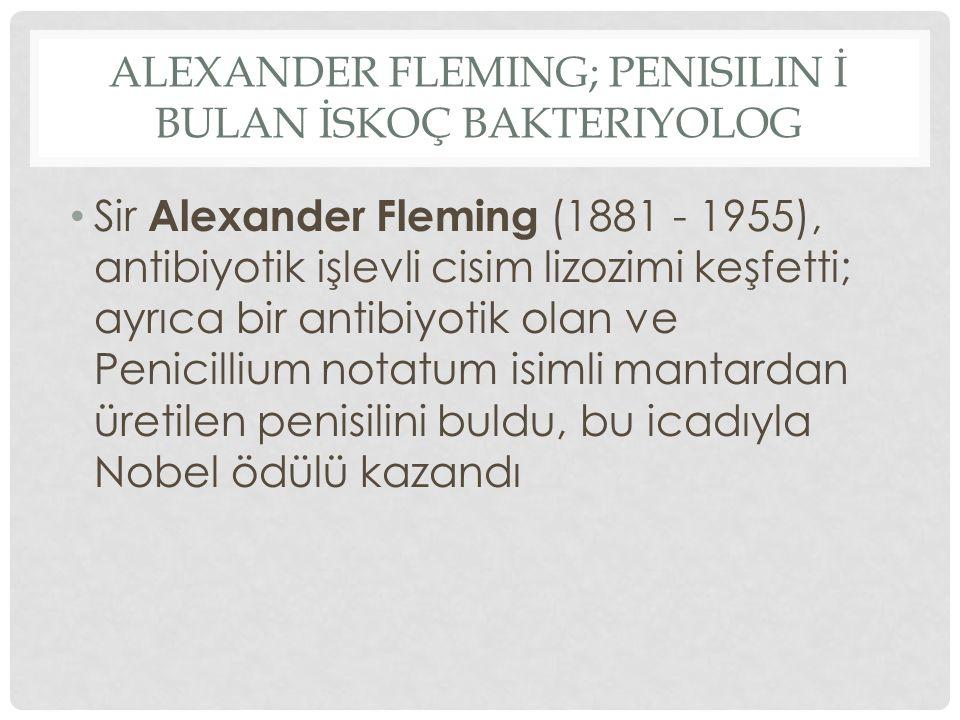 Sir Alexander Fleming (1881 - 1955), antibiyotik işlevli cisim lizozimi keşfetti; ayrıca bir antibiyotik olan ve Penicillium notatum isimli mantardan