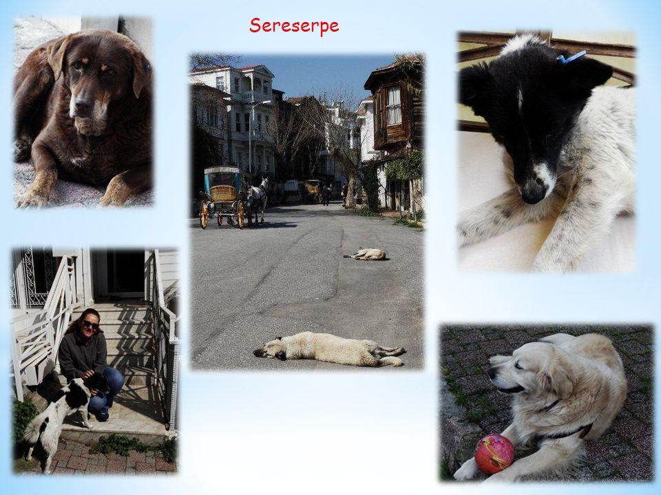 Sereserpe