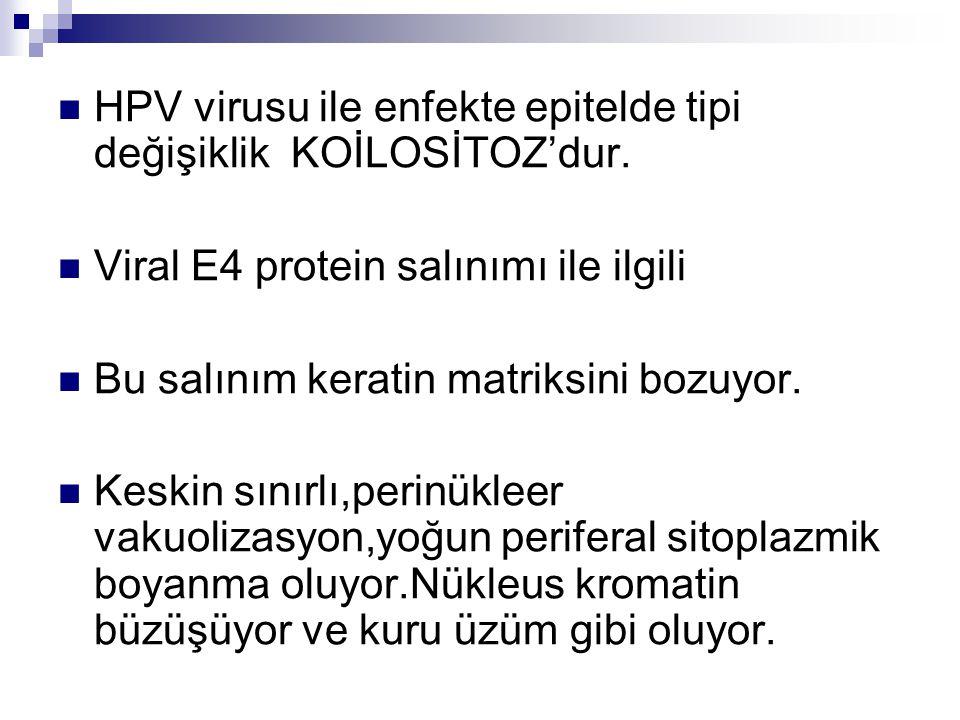 HPV virusu ile enfekte epitelde tipi değişiklik KOİLOSİTOZ'dur. Viral E4 protein salınımı ile ilgili Bu salınım keratin matriksini bozuyor. Keskin sın