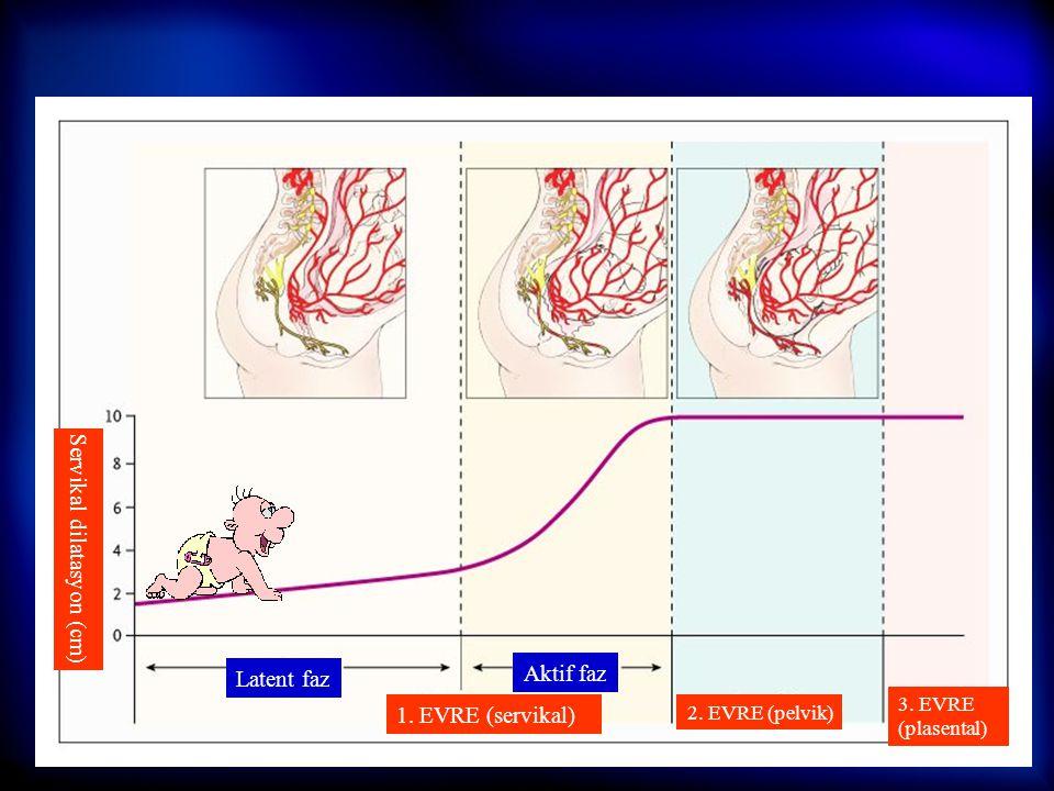 10 Hazırlık Doğum Sezaryen Rejyonal Analjezi  Öykü (maternal ve obstetrik)  Fizik muayene (bel bölgesi )  İV damar yolu açılması (RL/SF)  Aspirasy