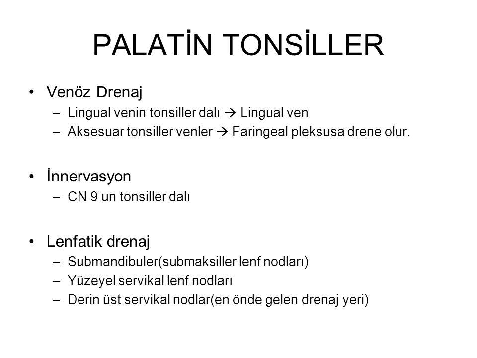 PALATİN TONSİLLER Venöz Drenaj –Lingual venin tonsiller dalı  Lingual ven –Aksesuar tonsiller venler  Faringeal pleksusa drene olur. İnnervasyon –CN
