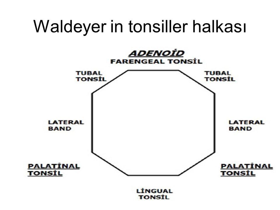 Waldeyer in tonsiller halkası