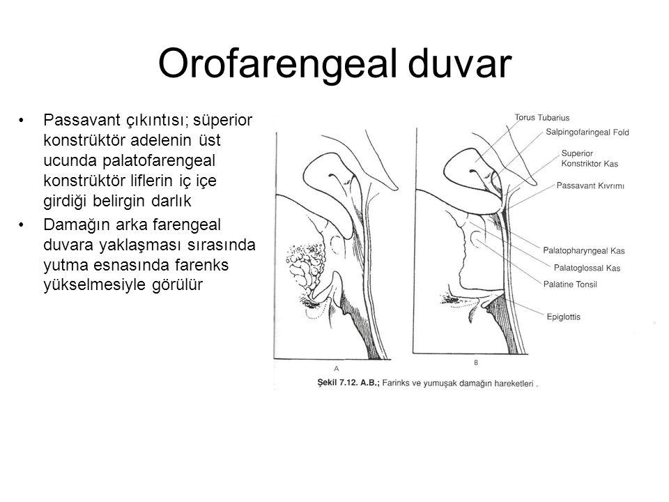 Orofarengeal duvar Passavant çıkıntısı; süperior konstrüktör adelenin üst ucunda palatofarengeal konstrüktör liflerin iç içe girdiği belirgin darlık D