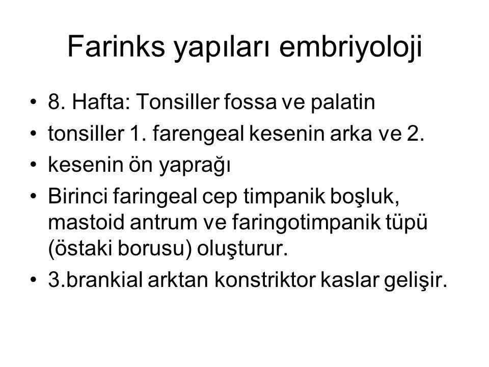 Farinks yapıları embriyoloji 8. Hafta: Tonsiller fossa ve palatin tonsiller 1. farengeal kesenin arka ve 2. kesenin ön yaprağı Birinci faringeal cep t