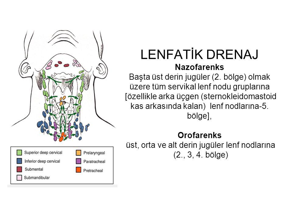 LENFATİK DRENAJ Nazofarenks Başta üst derin jugüler (2. bölge) olmak üzere tüm servikal lenf nodu gruplarına [özellikle arka üçgen (sternokleidomastoi
