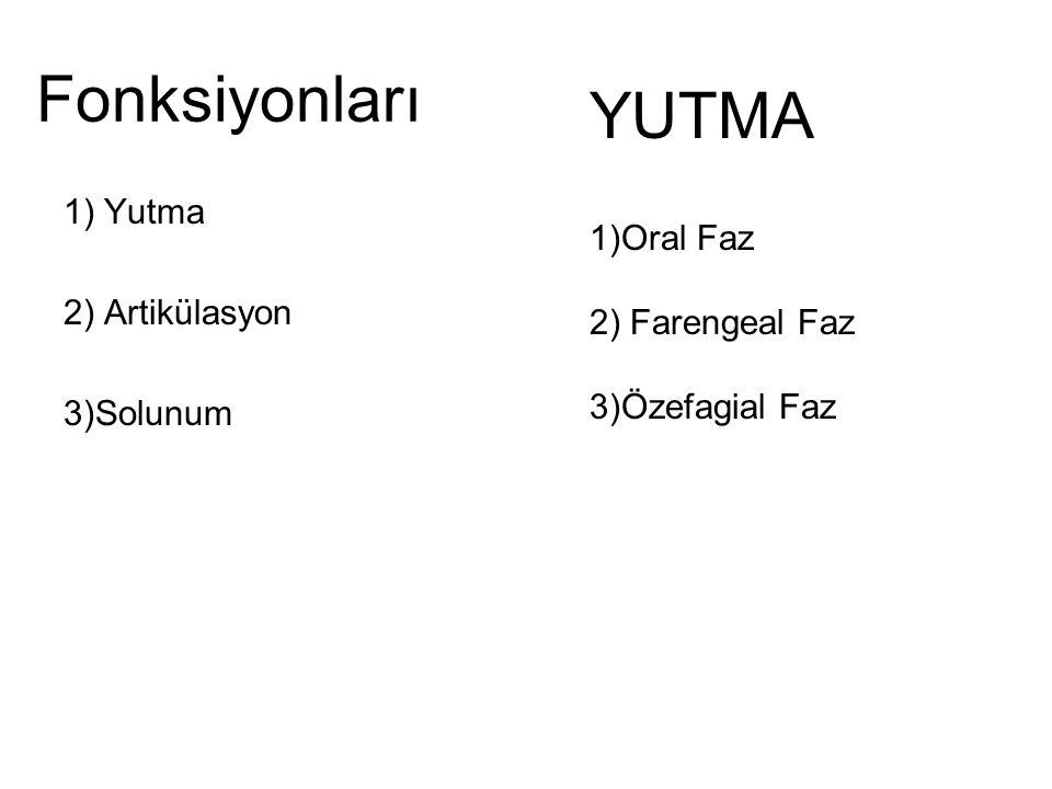 Fonksiyonları 1) Yutma 2) Artikülasyon 3)Solunum YUTMA 1)Oral Faz 2) Farengeal Faz 3)Özefagial Faz