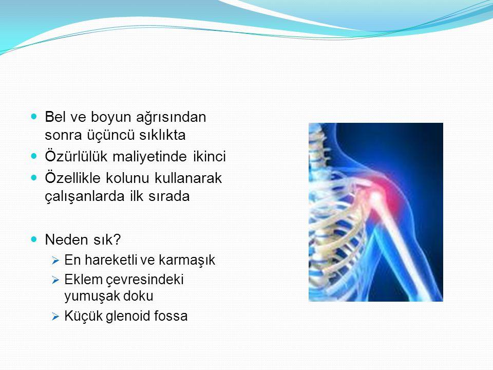 Bel ve boyun ağrısından sonra üçüncü sıklıkta Özürlülük maliyetinde ikinci Özellikle kolunu kullanarak çalışanlarda ilk sırada Neden sık?  En hareket