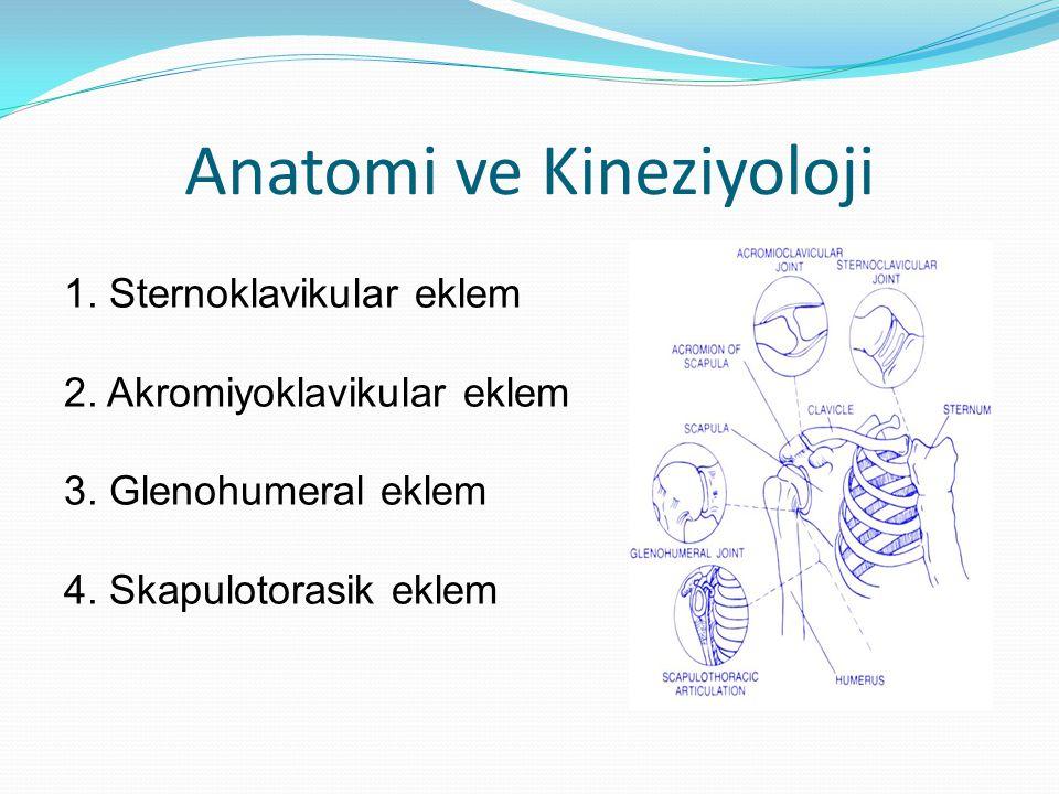 Anatomi ve Kineziyoloji 1. Sternoklavikular eklem 2. Akromiyoklavikular eklem 3. Glenohumeral eklem 4. Skapulotorasik eklem