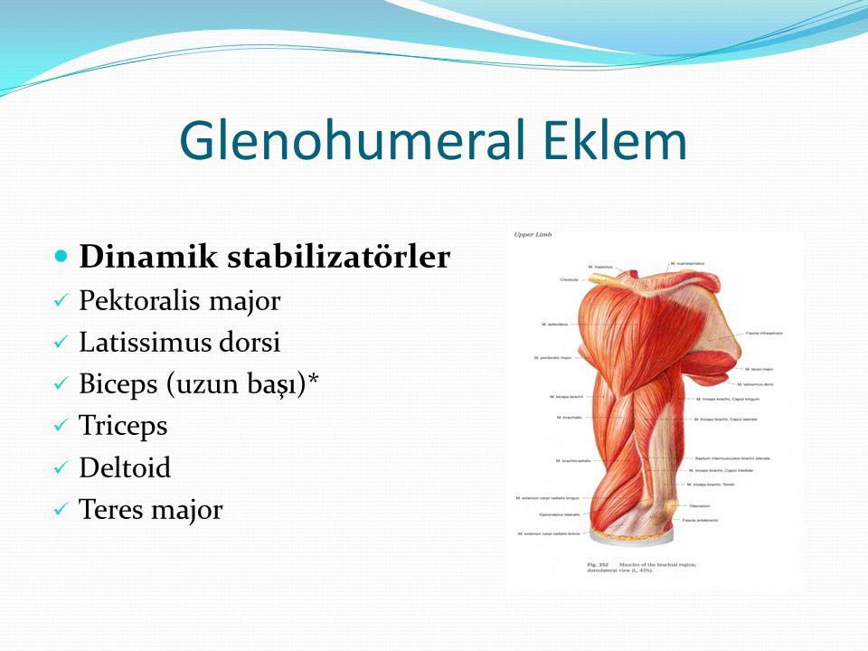 Glenohumeral Eklem Dinamik stabilizatörler Pektoralis major Latissimus dorsi Biceps (uzun başı)* Triceps Deltoid Teres major