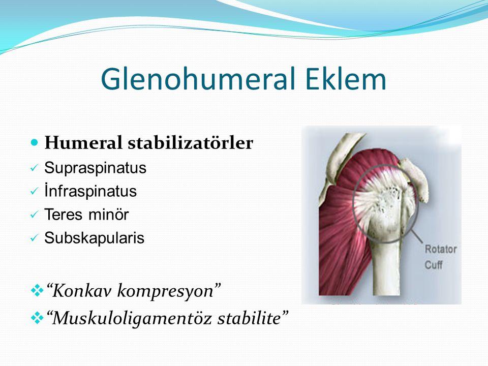 """Glenohumeral Eklem Humeral stabilizatörler Supraspinatus İnfraspinatus Teres minör Subskapularis  """"Konkav kompresyon""""  """"Muskuloligamentöz stabilite"""""""