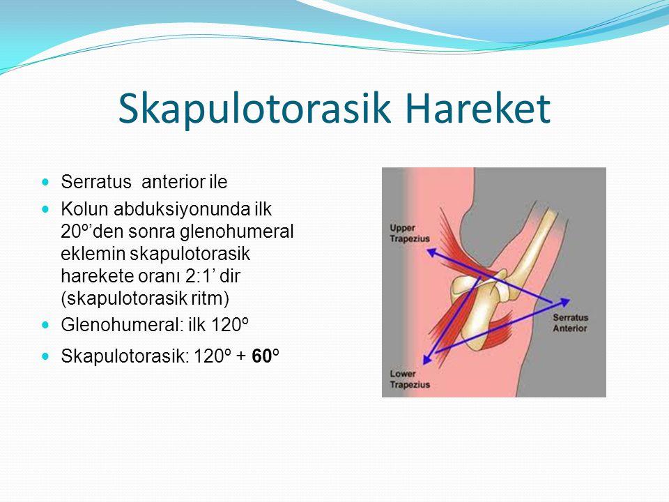 Skapulotorasik Hareket Serratus anterior ile Kolun abduksiyonunda ilk 20º'den sonra glenohumeral eklemin skapulotorasik harekete oranı 2:1' dir (skapu