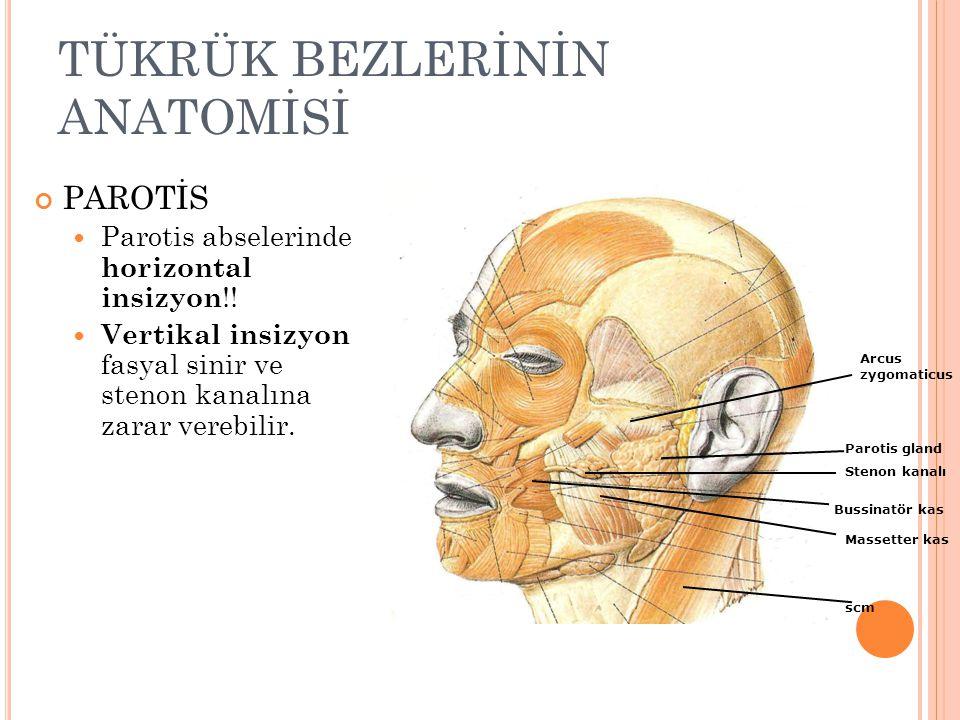 TÜKRÜK BEZLERİNİN ANATOMİSİ PAROTİS Parotis abselerinde horizontal insizyon !.
