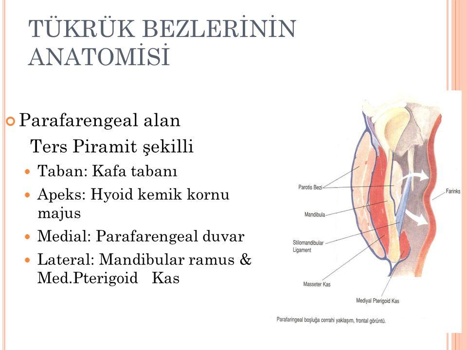 TÜKRÜK BEZLERİNİN ANATOMİSİ Parafarengeal alan Ters Piramit şekilli Taban: Kafa tabanı Apeks: Hyoid kemik kornu majus Medial: Parafarengeal duvar Lateral: Mandibular ramus & Med.Pterigoid Kas