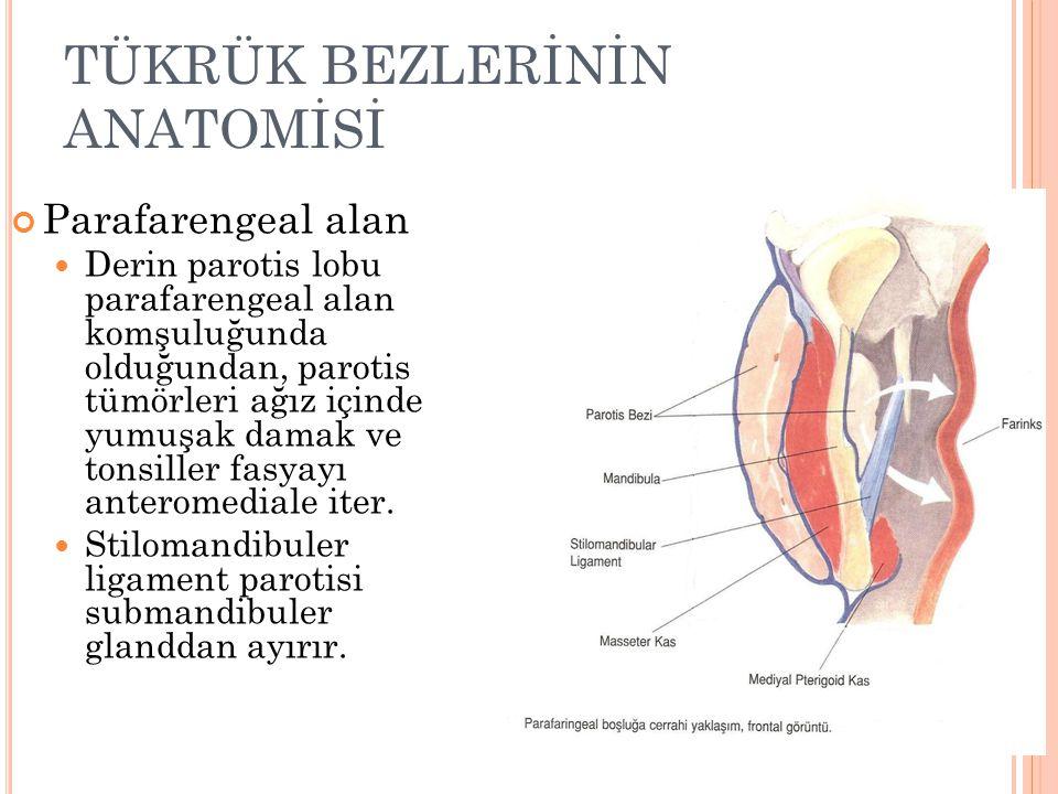 TÜKRÜK BEZLERİNİN ANATOMİSİ Parafarengeal alan Derin parotis lobu parafarengeal alan komşuluğunda olduğundan, parotis tümörleri ağız içinde yumuşak damak ve tonsiller fasyayı anteromediale iter.