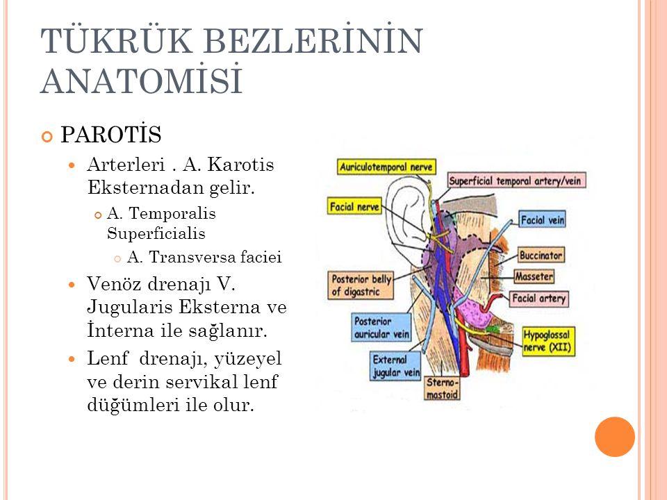 PAROTİS Arterleri.A. Karotis Eksternadan gelir. A.