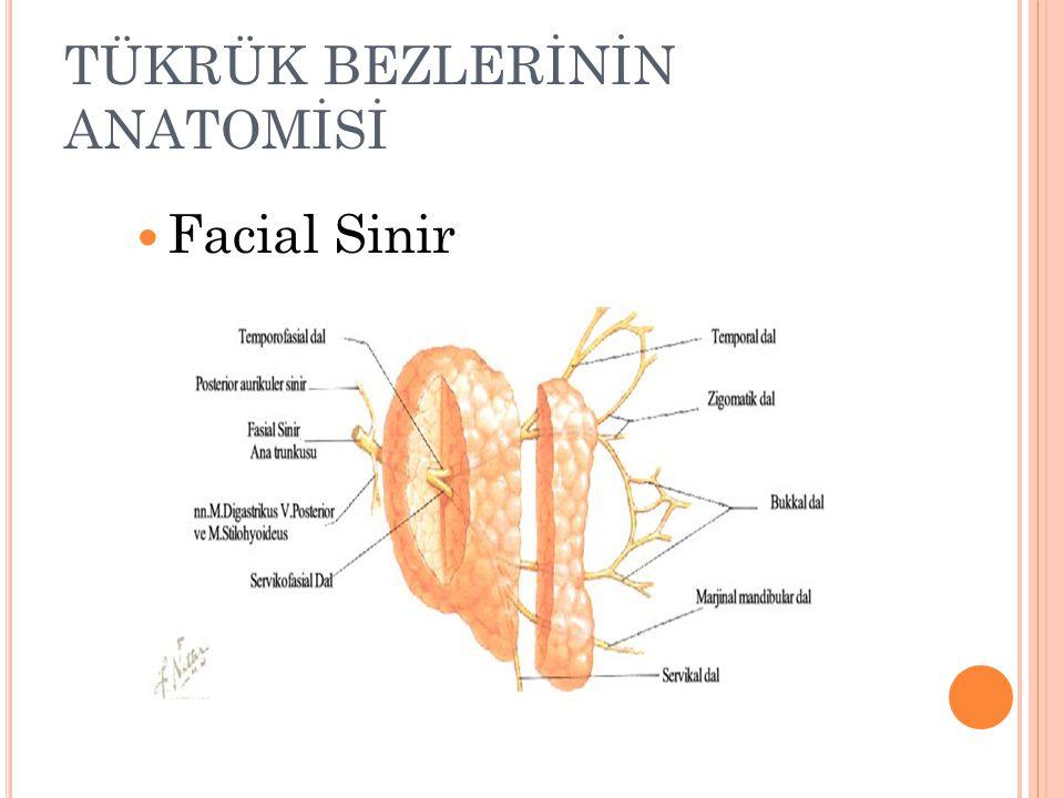 TÜKRÜK BEZLERİNİN ANATOMİSİ Facial Sinir