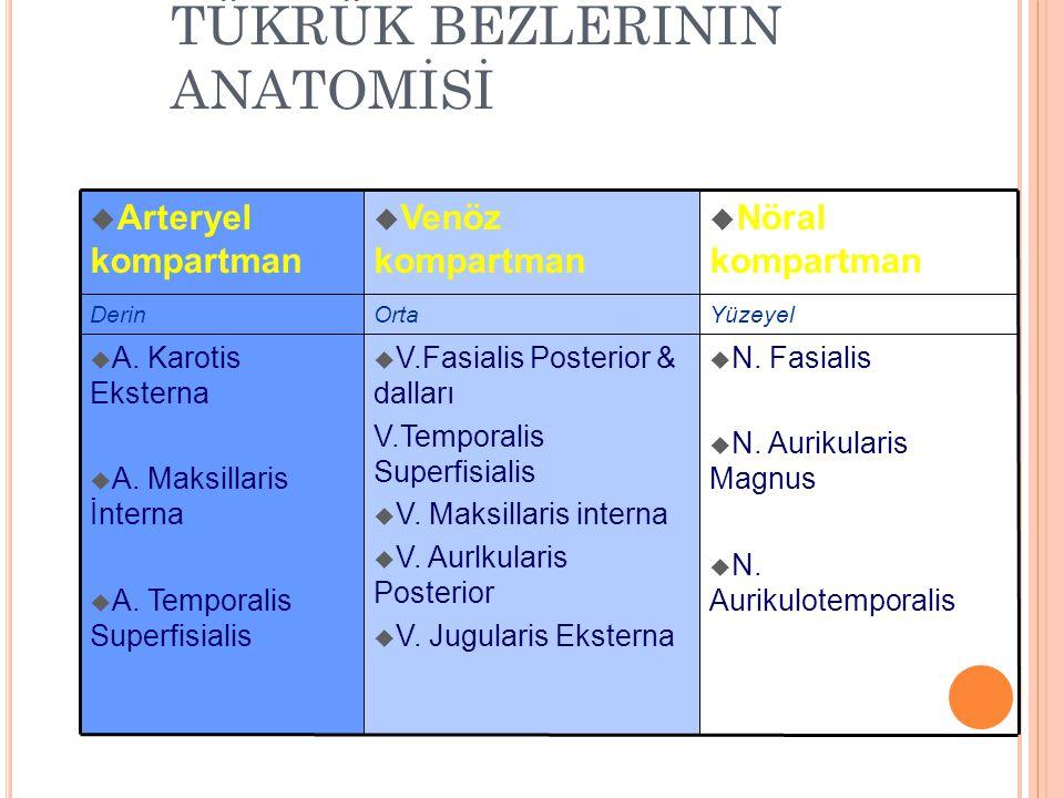 TÜKRÜK BEZLERİNİN ANATOMİSİ  N.Fasialis  N. Aurikularis Magnus  N.