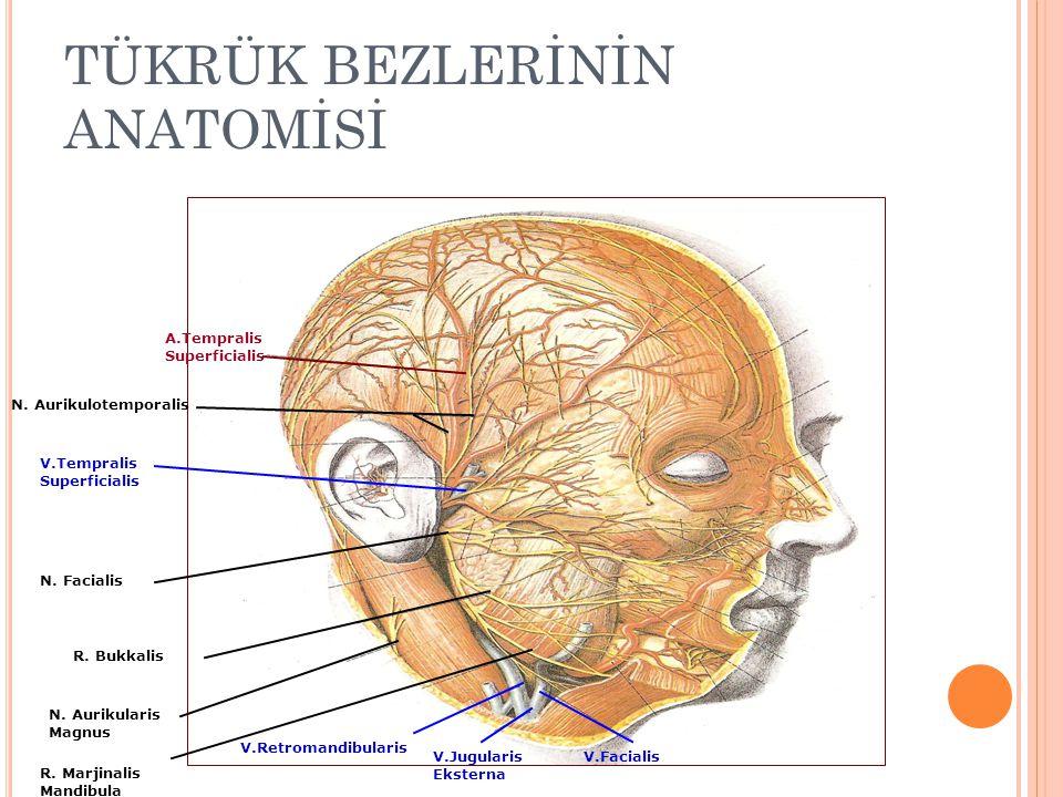 TÜKRÜK BEZLERİNİN ANATOMİSİ A.Tempralis Superficialis V.Tempralis Superficialis N.