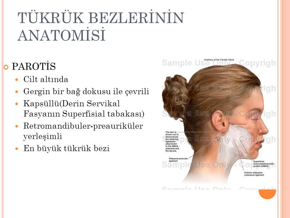 TÜKRÜK BEZLERİNİN ANATOMİSİ PAROTİS N.