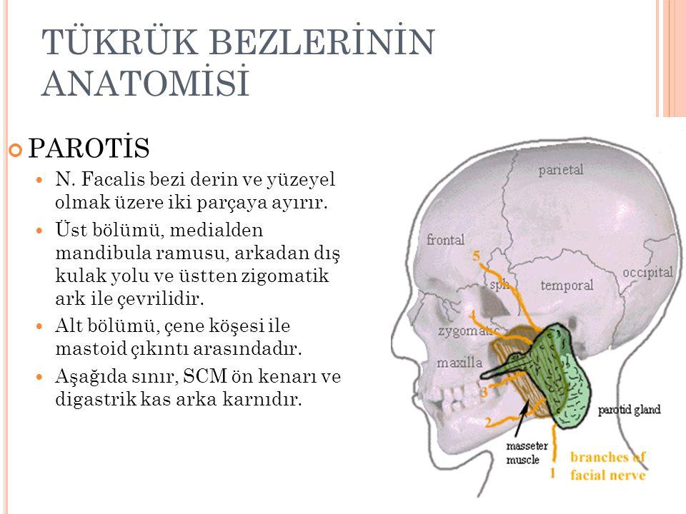 TÜKRÜK BEZLERİNİN ANATOMİSİ PAROTİS Yüzeyel ♦ Kondiler Uzantı : temporomandibular eklemin yanındadır.