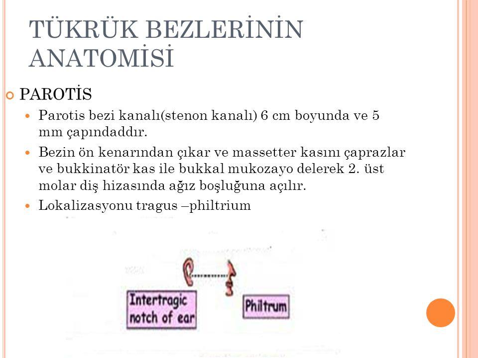TÜKRÜK BEZLERİNİN ANATOMİSİ PAROTİS Parotis bezi kanalı(stenon kanalı) 6 cm boyunda ve 5 mm çapındaddır.