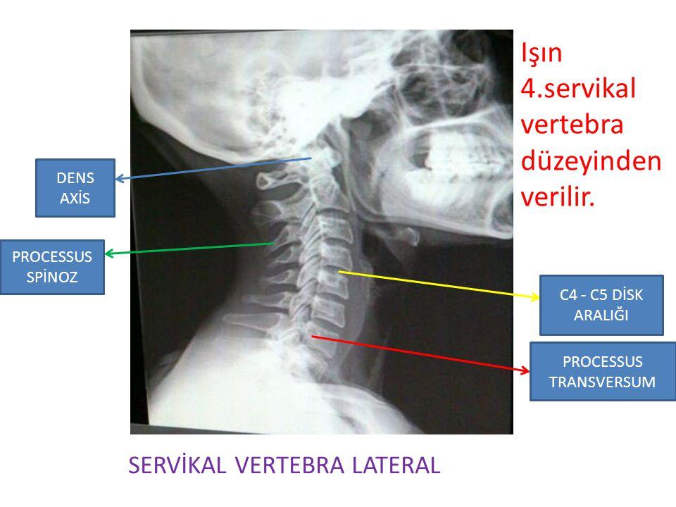 Işın 4.servikal vertebra düzeyinden verilir. SERVİKAL VERTEBRA LATERAL PROCESSUS SPİNOZ PROCESSUS TRANSVERSUM DENS AXİS C4 - C5 DİSK ARALIĞI