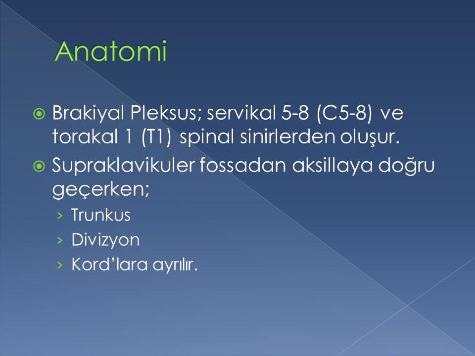  Brakiyal Pleksus; servikal 5-8 (C5-8) ve torakal 1 (T1) spinal sinirlerden oluşur.  Supraklavikuler fossadan aksillaya doğru geçerken; › Trunkus ›