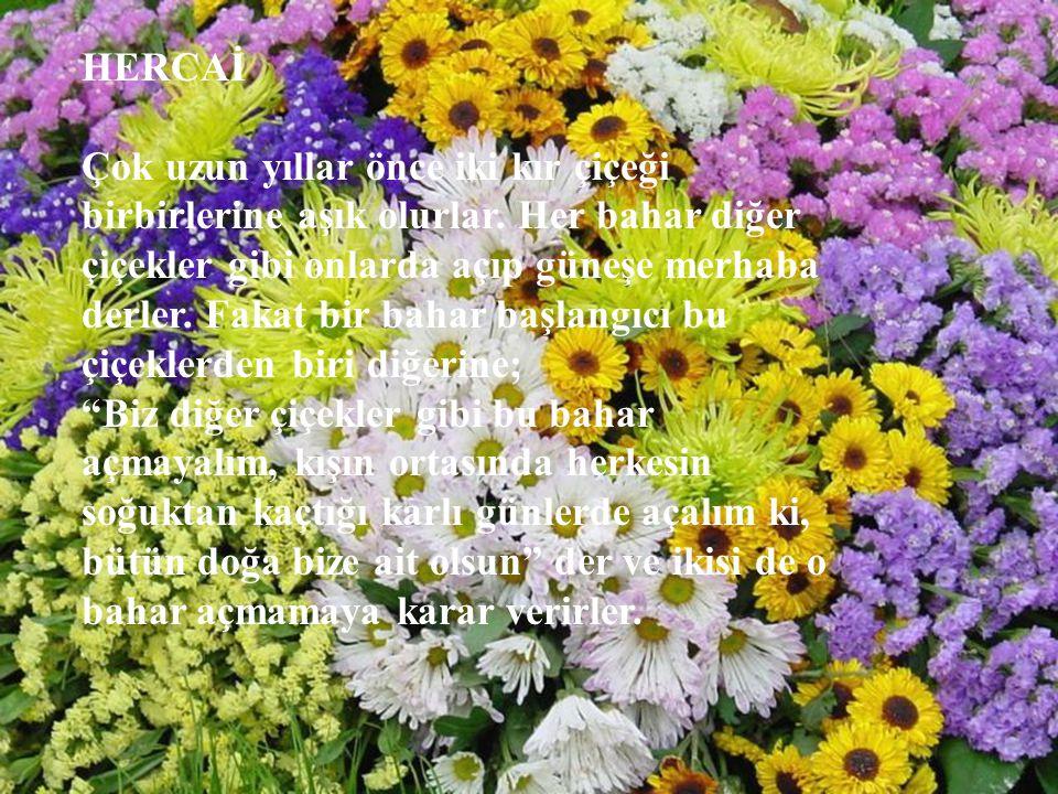 HERCAİ Çok uzun yıllar önce iki kır çiçeği birbirlerine aşık olurlar. Her bahar diğer çiçekler gibi onlarda açıp güneşe merhaba derler. Fakat bir baha
