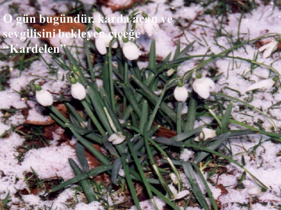 """O gün bugündür, karda açan ve sevgilisini bekleyen çiçeğe """"Kardelen"""""""