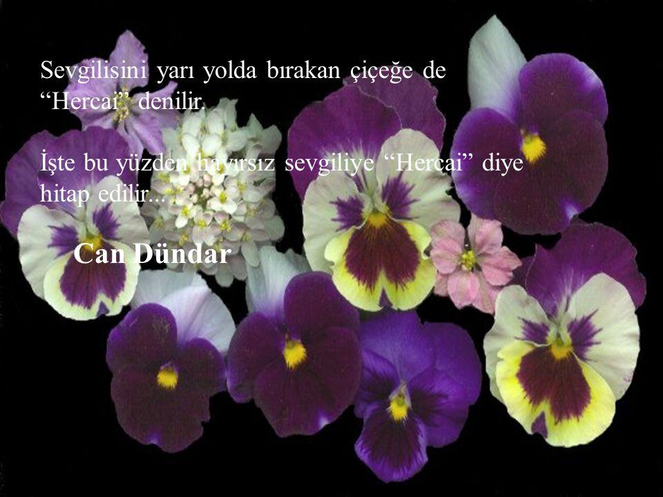 """Sevgilisini yarı yolda bırakan çiçeğe de """"Hercai"""" denilir. İşte bu yüzden hayırsız sevgiliye """"Hercai"""" diye hitap edilir... Can Dündar"""